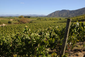 Beyond Bordeaux, Burgundy, and – Peru
