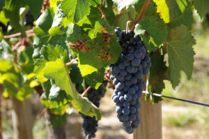 Vino Expressions – Welcome!