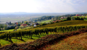 Hilltop Home to Slovenian Wine
