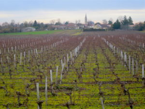 New Wine Scoring System – Anderson Valley Pinot Noir