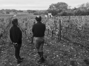 Harvest Season And Moseying Around Médoc