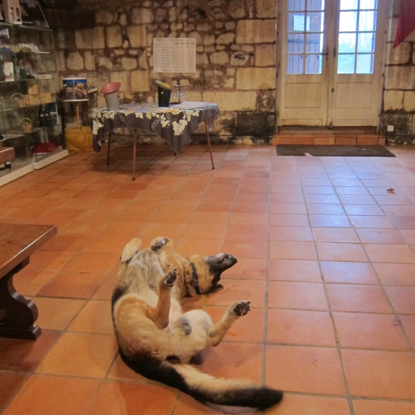 'I was a Winery Dog long before the Aussies marketed that term'